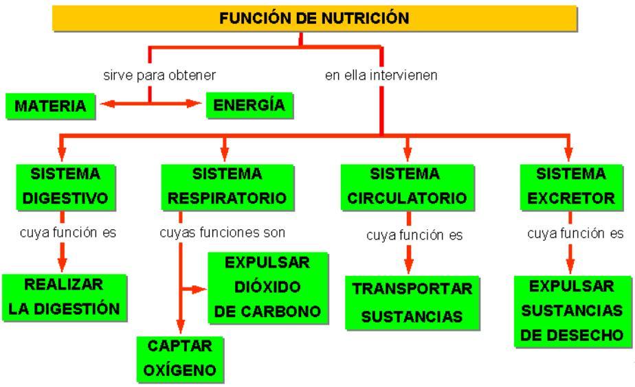 10 alimentos transgenicos necesario flash