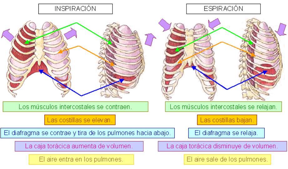Diferencias entre sistole y diastole yahoo dating 10
