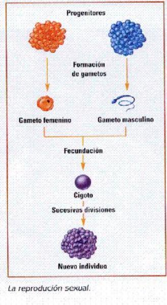 Plantas tipos de reproduccion asexual reproduction